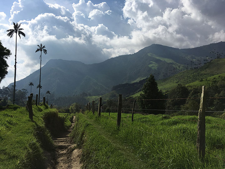 Cocora Hiking Guide700